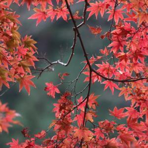 鎌倉の紅葉はいつ?
