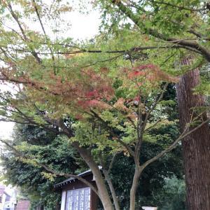 鎌倉の紅葉2019  今日の円覚寺  11月3日