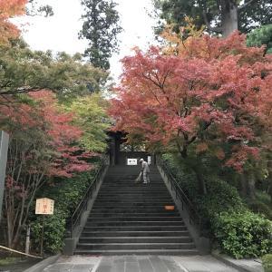 鎌倉の紅葉情報2019  今日の円覚寺  12月4日