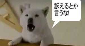 ソフトバンクの孫社長 とうとう訴えられる【ウィーワーク問題