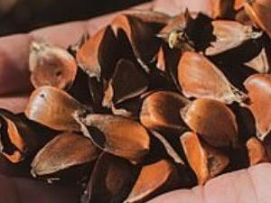 〇詐欺?】イギリスやアメリカで中国発送の謎の種子が大量に送り付けられる【テロ?