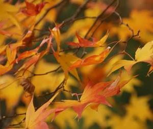 平泉「毛越寺」の紅葉