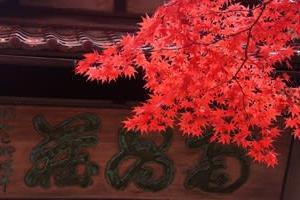 盛岡「南昌荘」で紅葉