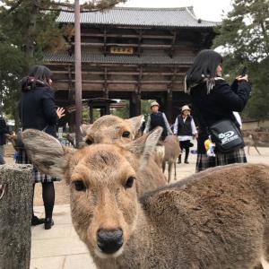 奈良マラソンで鹿とたわむれ、地元大阪でLIVE