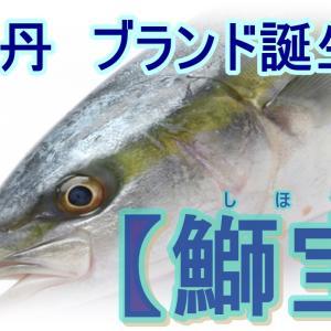 【北海道積丹グルメ】ウニだけじゃない?鰤のブランド「鰤宝」が誕生!