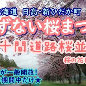 【しずない桜まつり】新ひだか町二十間道路並木!日程や見頃・混雑状況は?
