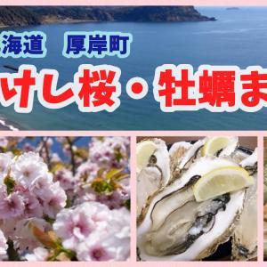 【あっけし桜・牡蠣まつり】お花見と旬のグルメを一緒に満喫!贅沢イベント