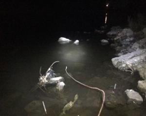 夜の川でテナガエビ in 外房