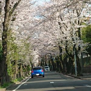 ~渋谷西柔道ブログ~【止まるな、進め‼️】♪ヽ(´▽`)/