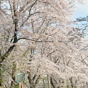 ~渋谷西柔道ブログ~【生命力って最高‼️】(゜ロ゜;ノ)ノ