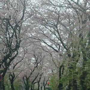 ~渋谷西柔道ブログ~【一段落です‼️】(*^O^*)