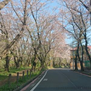 ~渋谷西柔道ブログ~【いよいよ、ですね‼️】(*ToT)