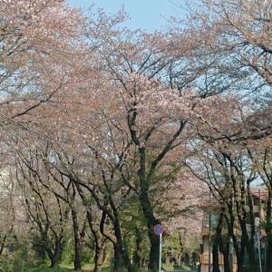 ~渋谷西柔道ブログ~【もう、ワクワクだ~‼️】(*´∀`)♪