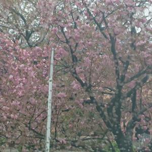 ~渋谷西柔道ブログ~【元気、元気‼️】♪ヽ(´▽`)/