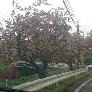 ~渋谷西柔道ブログ~【さてと、今日は‼️】(*´∀`)♪
