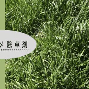 雑草対策!除草剤の種類や特徴、注意点 オススメの売れ筋も