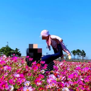 仁川空港近くのコスモス絶景スポット【하늘정원ーハヌル庭園】