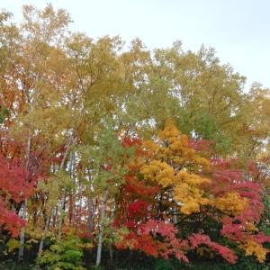 北の大地の紅葉☆旭山公園