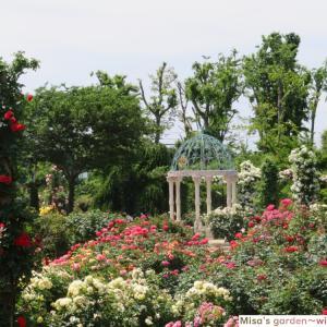 1600種10000株ものバラが咲き誇る 世界でも認められた 京成バラ園(Keisei rose garden)