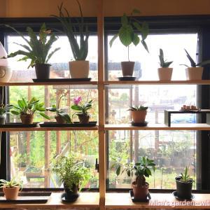 10月のお庭~蘭の棚増設、ポタジェ改造DIY etc~雨で全然進まない庭仕事