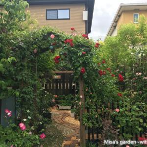 つるバラの誘引剪定の難しさ&DIY&春のお庭