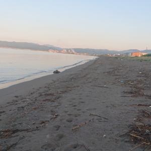 今年初キス釣り&津軽海峡夏マコガレイ狙い