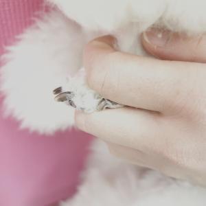 爪切りの頻度*゜