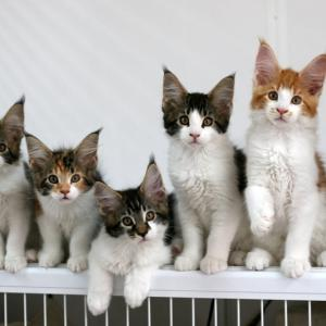 子猫の募集状況