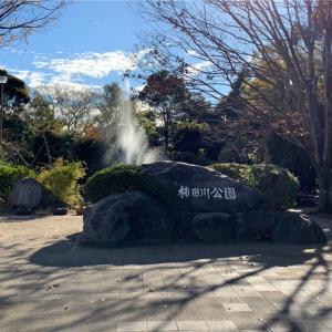 【静岡県観光】柿田川公園に行ってきた【湧き水がすごい!】
