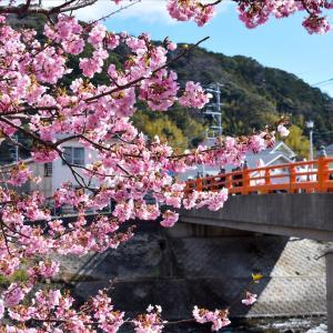 🌸2020年河津桜で早めのお花見!🌸