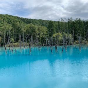 【絶景】美瑛にある青い池に行ってきた!【北海道】