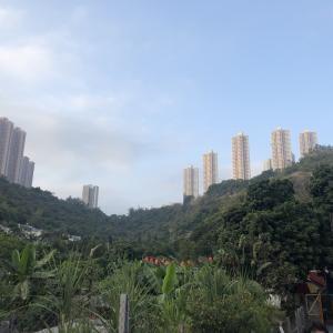 武漢の新型コロナウィルス。香港🇭🇰では深刻な状況になってます。日本の皆さんも気をつけて!