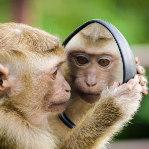 鏡に自分を映しながら フォームチェック