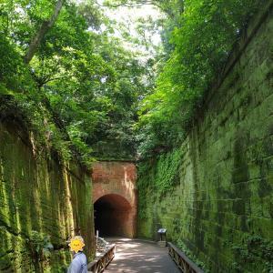 神奈川 苔が美しい無人島 要塞の歴史もある猿島