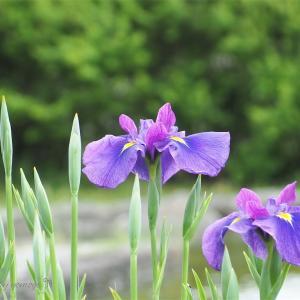 徳島県内、5月頃おすすめな写真スポットを紹介します