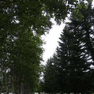 木々と森のノスタルジア