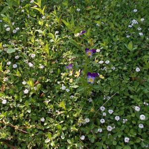 お花畑と蜜蜂と