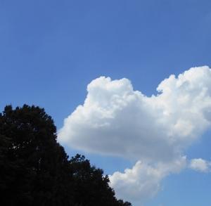 樹と雲と空と  なあんにもしない