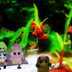 草の実と妖精たち   この春生まれの小鮒たち