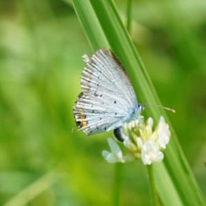 蝶の写真って・・・