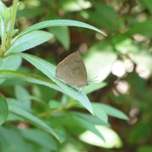 蝶か蛾か?