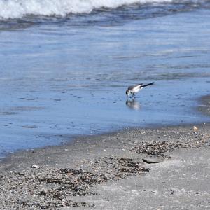 週末ライフ。「太平洋の片隅で、寄せては返す小波に寄り添い、小鳥が躍る海岸でひとり、ぽつりと春を眺める」の巻。