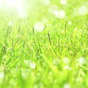 進め!俳句ビギナー㉑。「麗らかな5月の季語に引き寄せられて、作句に挑むもたどり着けるか葉桜の頃の趣き」の巻。