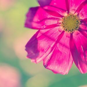 進め!俳句ビギナー㉒。「薄暑の候。『初夏の海』から『日常を詠む』まで、俳句づくりに挑んでもみる夏探しの頃」の巻。