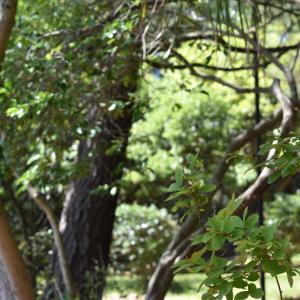 散文夢想「五月雨に濡れる青葉と花びらは夏の空への衣替え」。