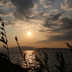散文夢想「青葉に夏草、アジサイの花の七変化は移ろう季節のグラデーション」。