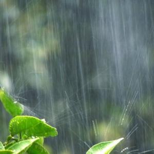 週末ライフ。「かみなり雲と雷鳴を連れて青葉を叩く大粒の雨。アップテンポの雨脚に躍った梅雨の頃の昼下がり」の巻。