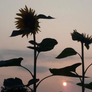 渚のサーフ物語。「太陽が顔を出すなら波打ち際がオレンジ色に染まる頃。『あとワン・セット』の胸の内」の巻。