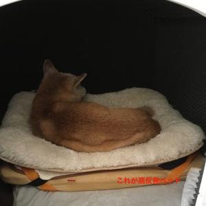 老犬ベッドおすすめ!高反発低反発のメリットデメリット手作りもあり