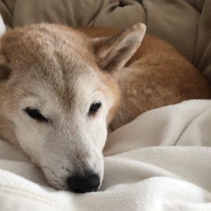 犬が怖い苦手な女が犬を飼う!克服した日の思い出